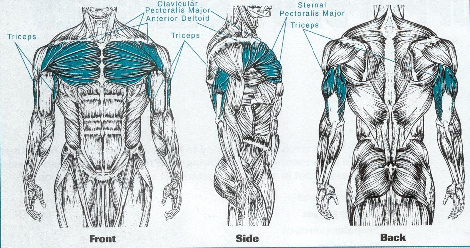 Bench Press With Proper Form Lifting For Health